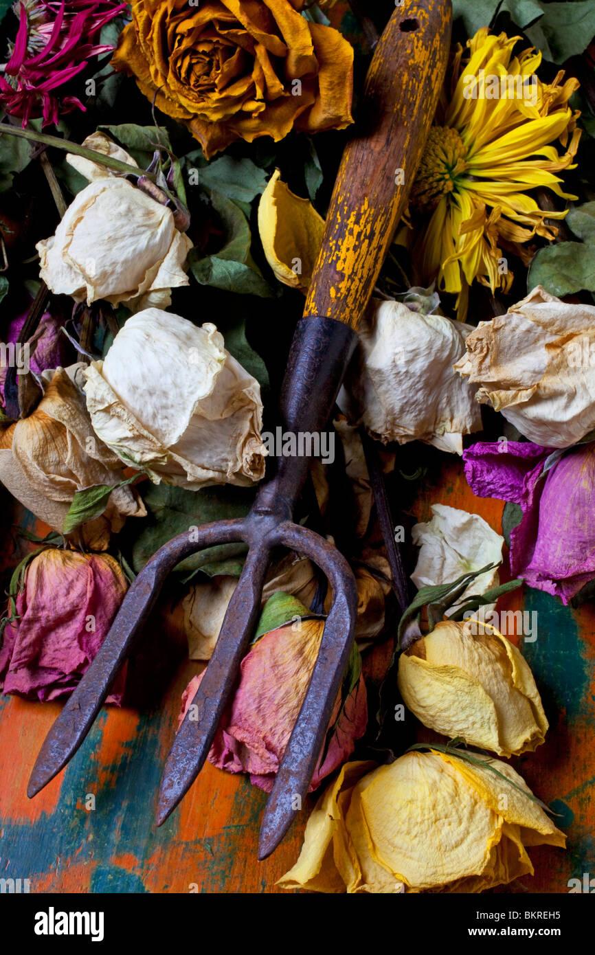Attrezzo da giardino e rose antiche Immagini Stock