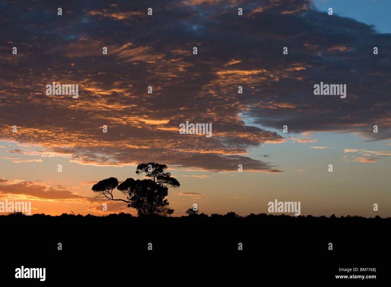 Sunrise, il Masai Mara riserva nazionale, Kenya, Africa orientale, Africa Immagini Stock