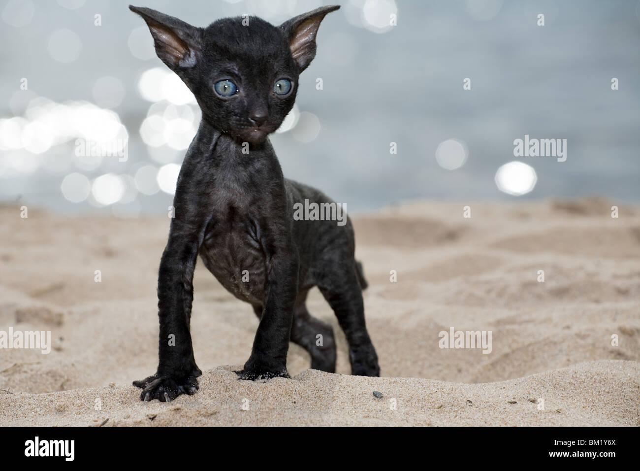 Nero micio a spiaggia