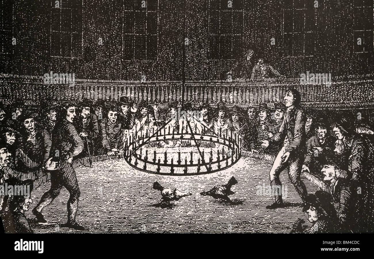 COCKFIGHTING di notte nel XVIII secolo Londra Immagini Stock