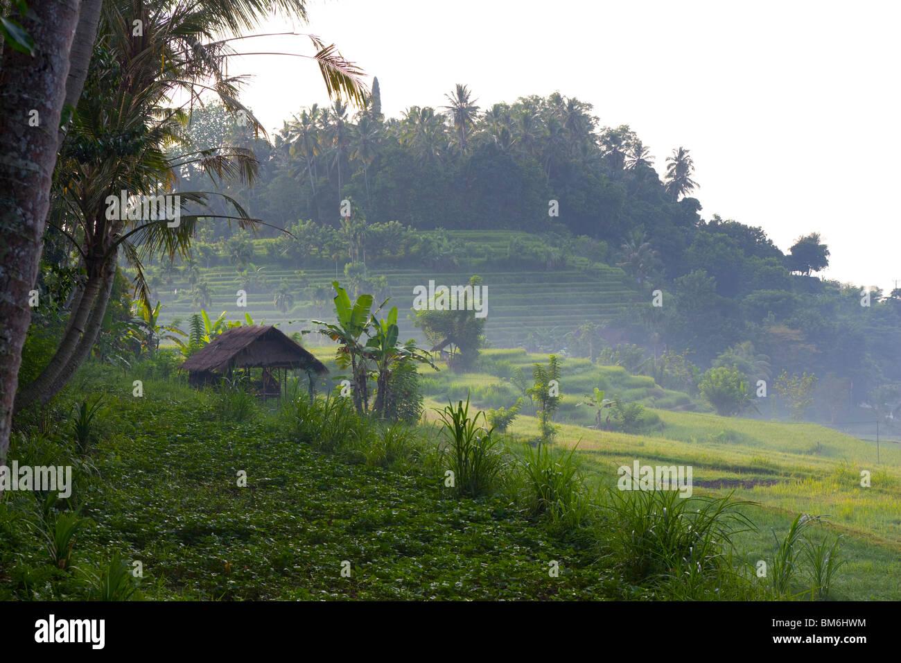 Campo di riso a Tirta gangga, Bali Indonesia Immagini Stock