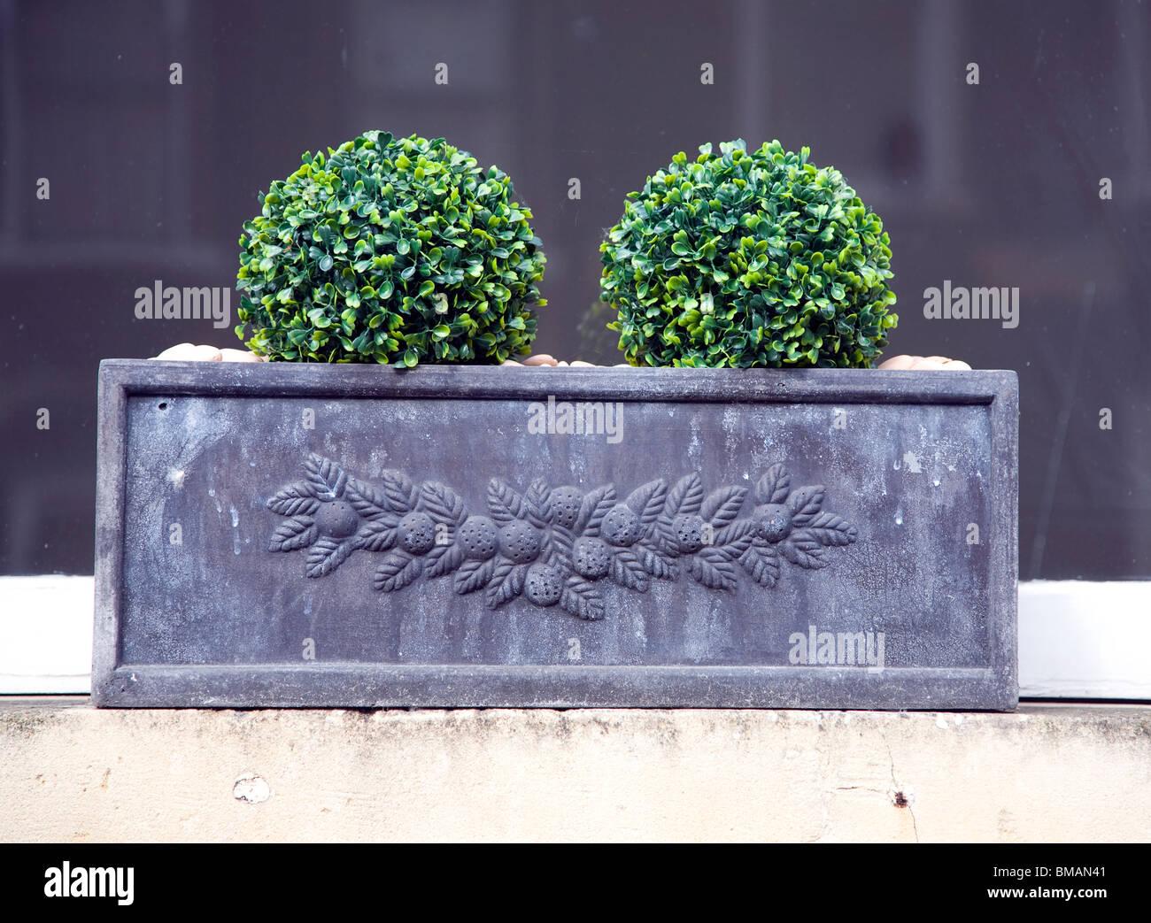 Attraente window box piante vasca da bagno foto & immagine stock