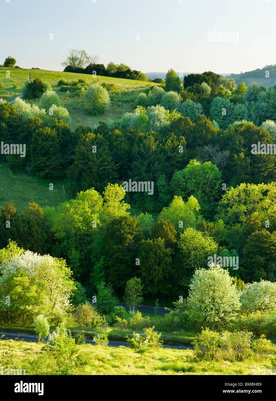 Box Hill a zig-zag, Surrey, Regno Unito. La molla Immagini Stock