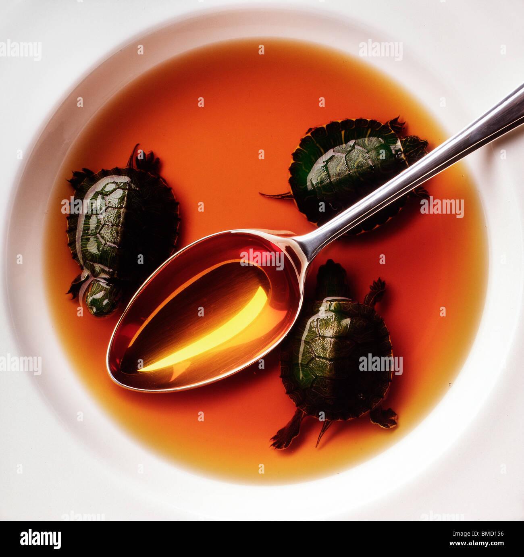 Zuppa di tartaruga Immagini Stock