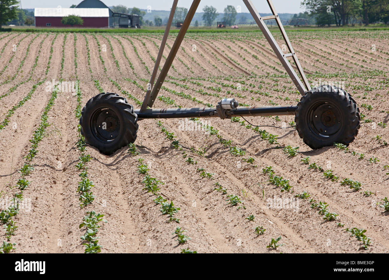 Mecosta, Michigan - Le ruote di irrigazione di un impianto sprinkler in filari di piante di patate su una grande Immagini Stock