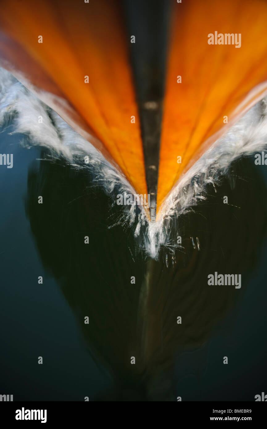 La riflessione di prua il taglio attraverso l acqua Immagini Stock