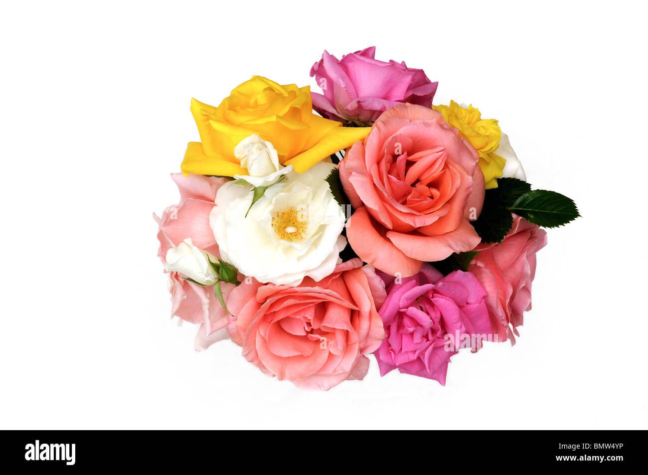 Mazzo di rose su sfondo bianco Immagini Stock