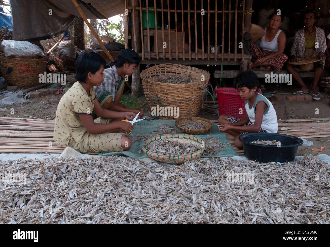 Myanmar. La Birmania. Visita al villaggio di Tübingen Gyi in Ayeryarwady delta. Ciclone Nargis postumi Immagini Stock