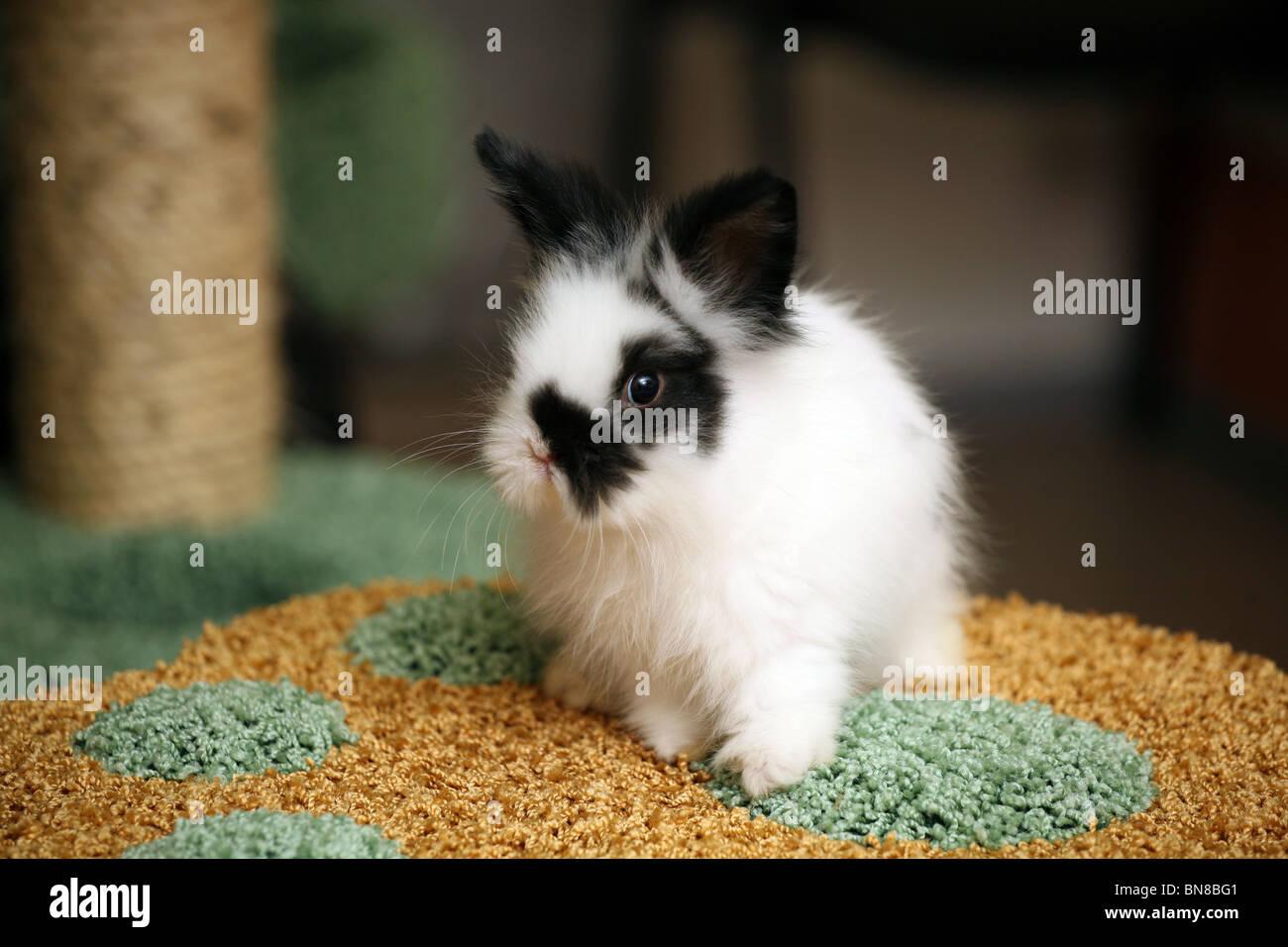 Piccolo nero-e-coniglio bianco Immagini Stock
