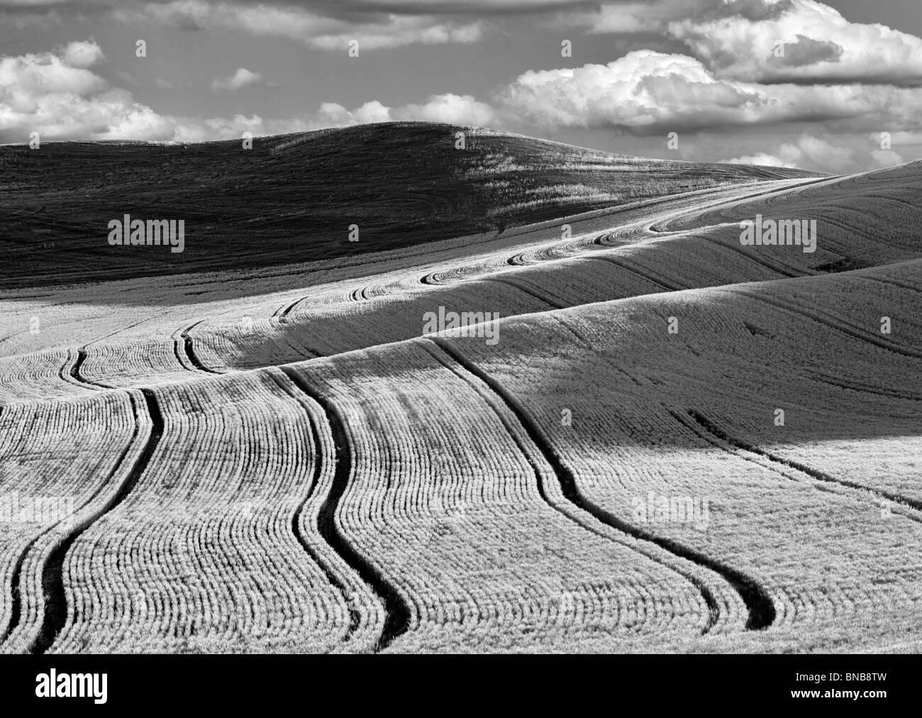 Linee di semina nel campo di grano. Il Palouse, Washington. Un cielo è stato aggiunto. Immagini Stock
