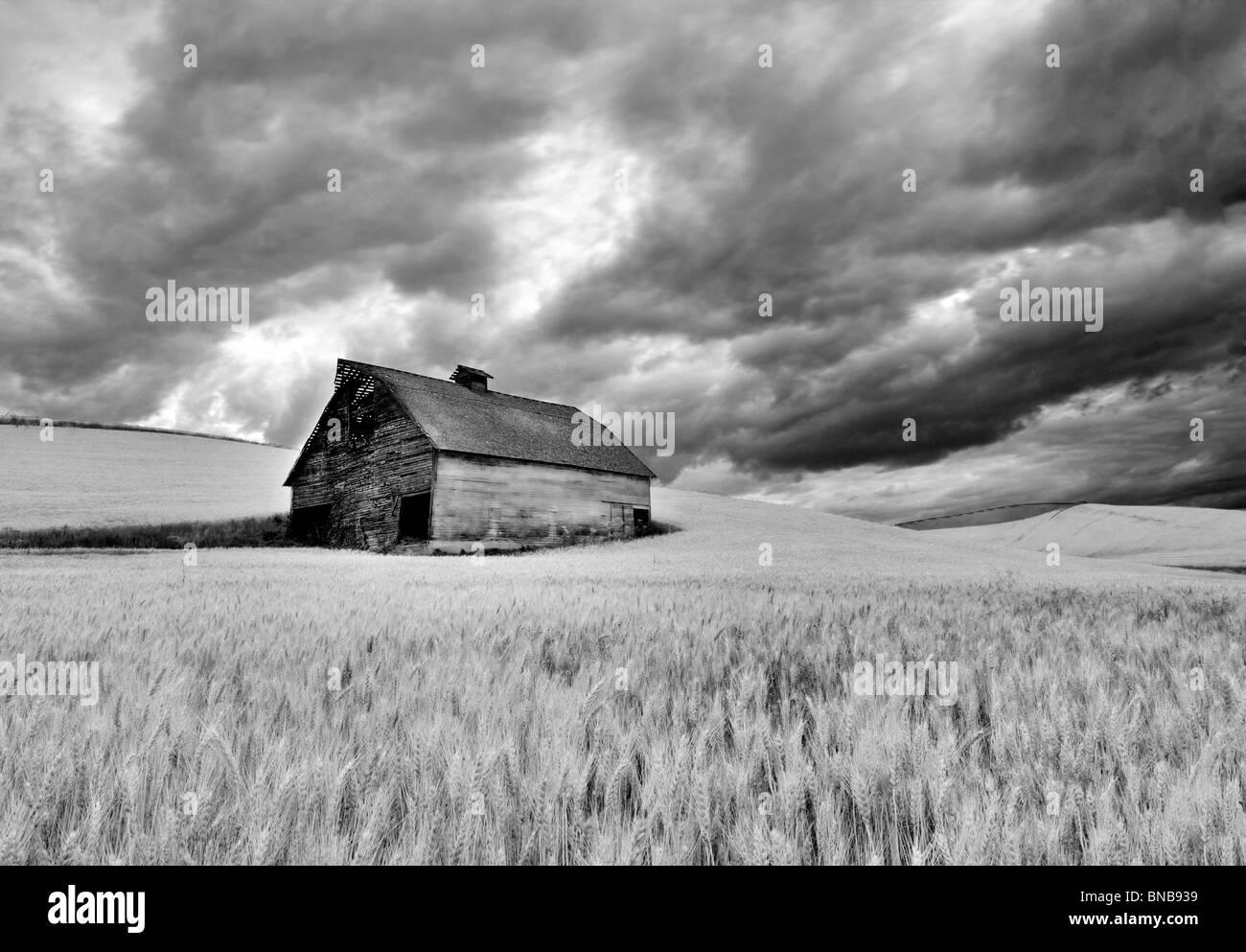 Fienile nel campo di grano con avvicinamento nuvole temporalesche. Il Palouse, Washington Immagini Stock