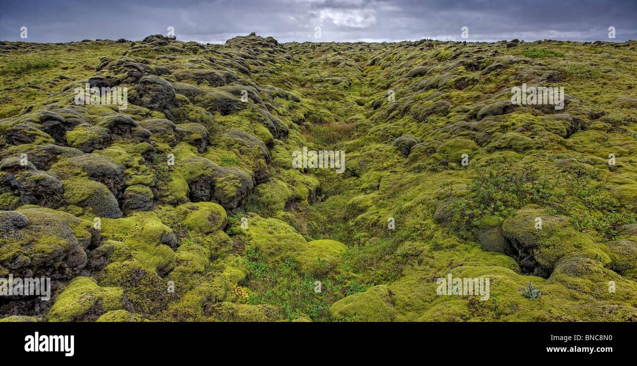 Moss lava coperto sulla costa sud dell'Islanda Foto Stock