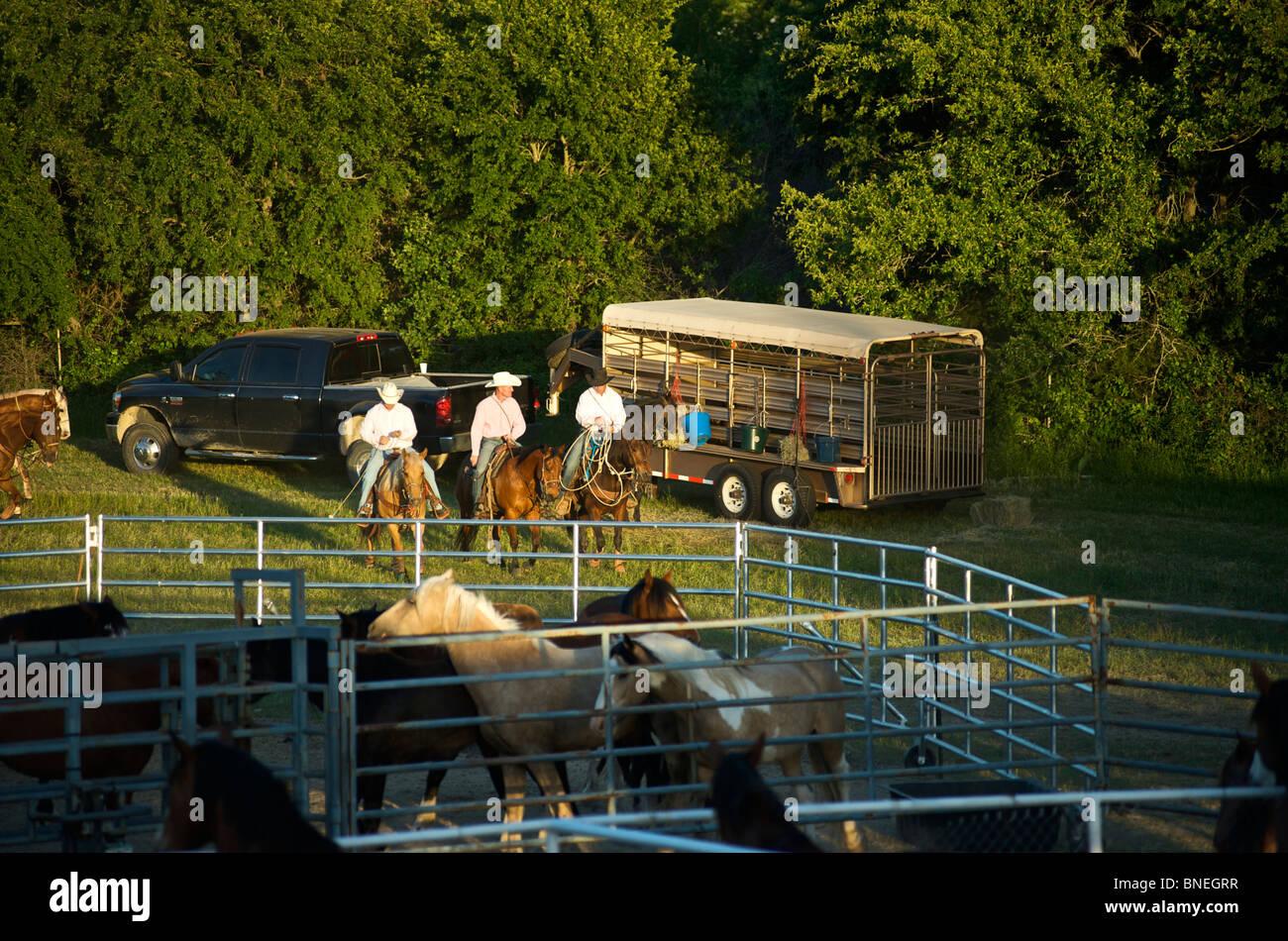 I membri del cowboy di PRCA cavalli dietro le quinte al rodeo evento a Bridgeport, Texas, Stati Uniti d'America Foto Stock