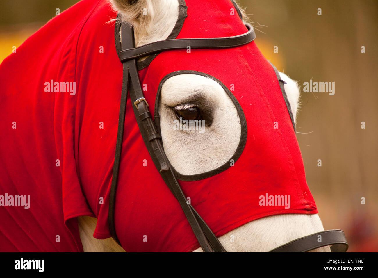 Testa di cavallo War Horse di un cavaliere Immagini Stock
