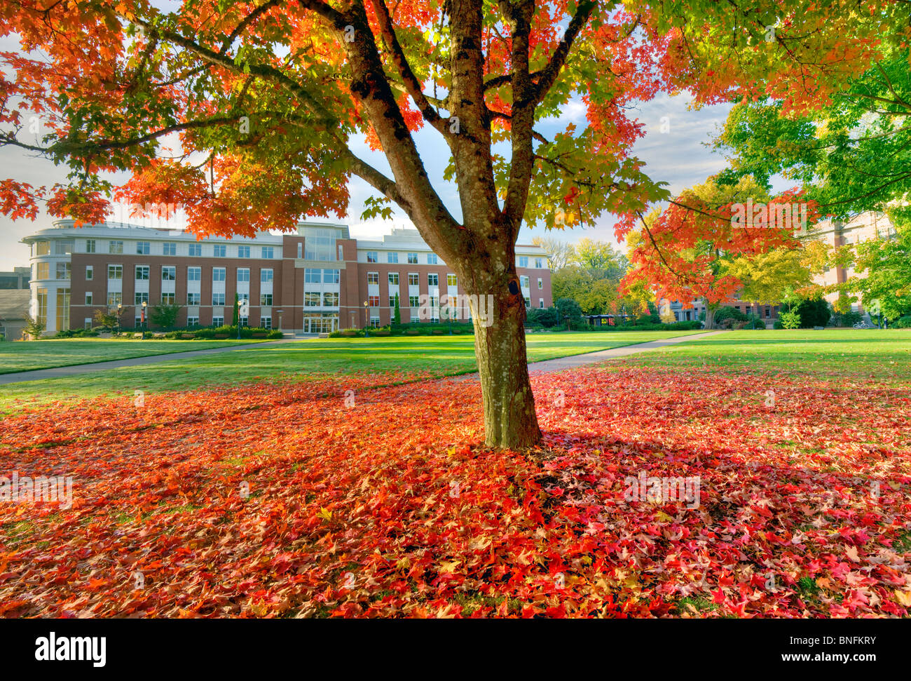 La valle di biblioteca e quad con Autunno a colori. Oregon State University. Immagini Stock