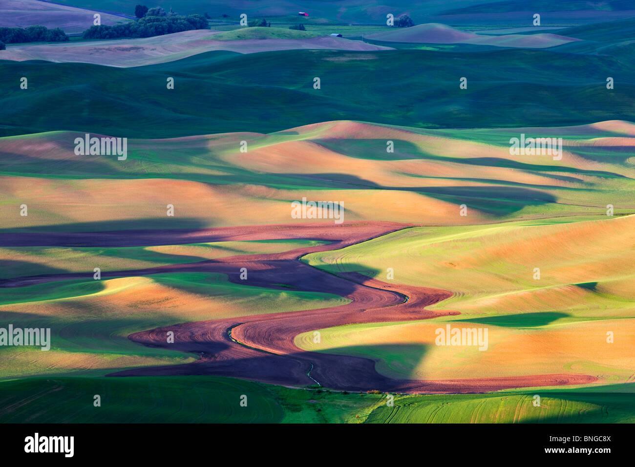 La molla nuova crescita del grano. Il Palouse, vicino Colfax, Washington. Immagini Stock