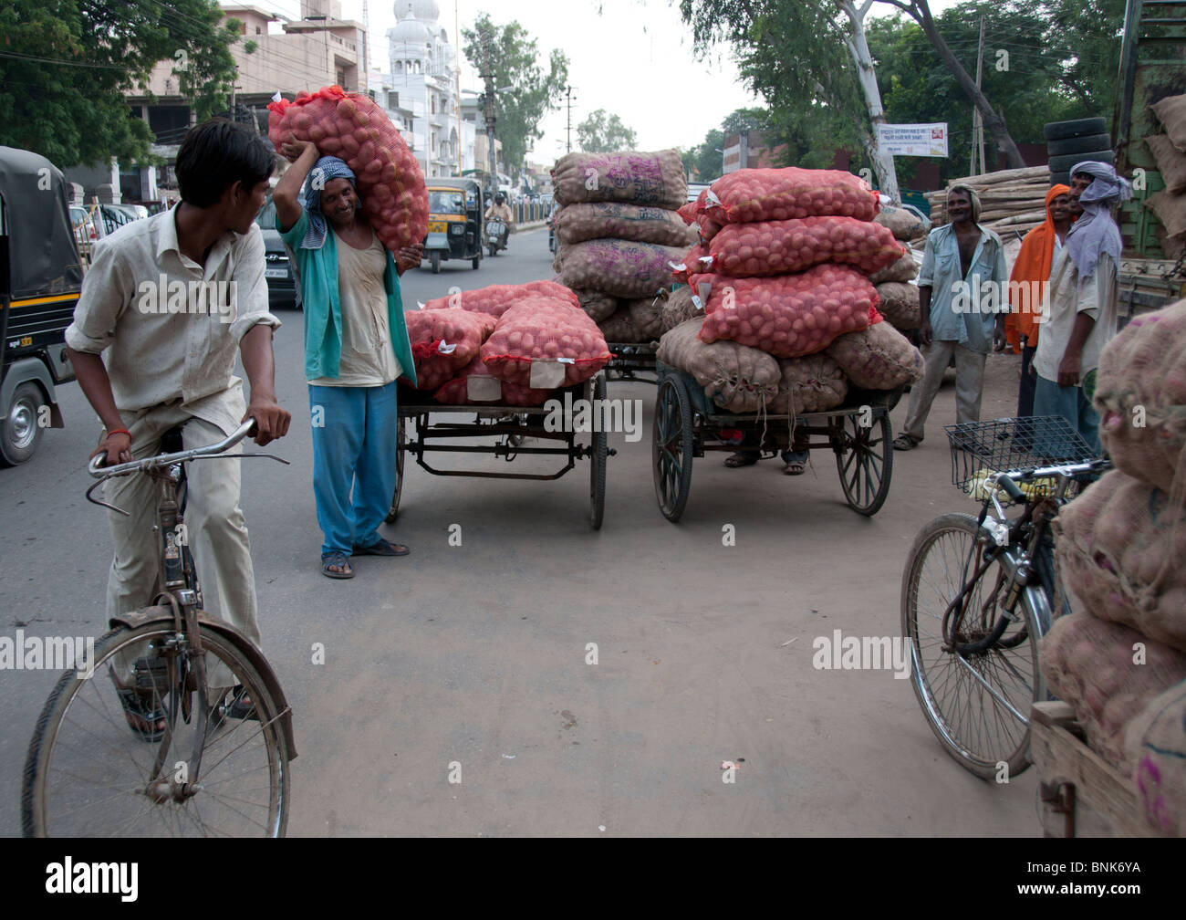 Consegna delle patate, il mercato, il vecchio Gurgaon, India Immagini Stock