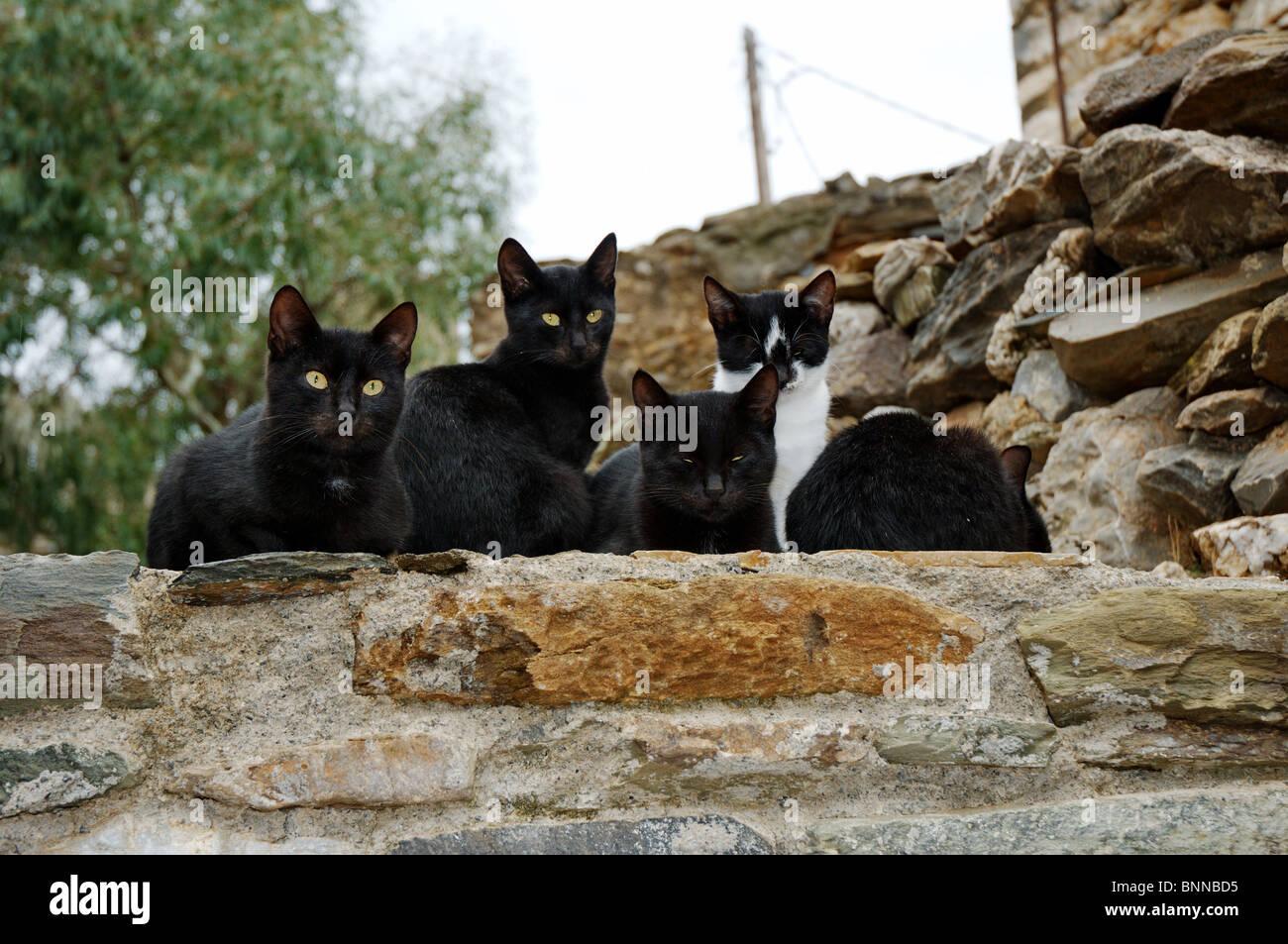 Katze Katzen Säugetier Säugetiere Haustier Haustiere Katzenfamilie griechische Katzen Gesamtansicht Griechenland Immagini Stock