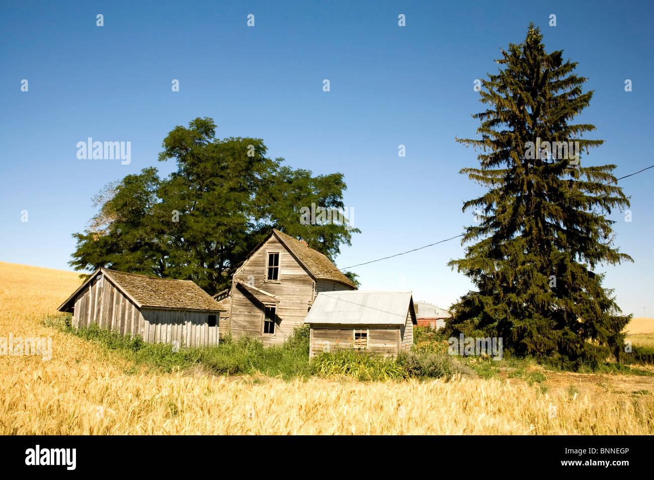 Casa abbandonata nella nebbia di un campo di grano Immagini Stock