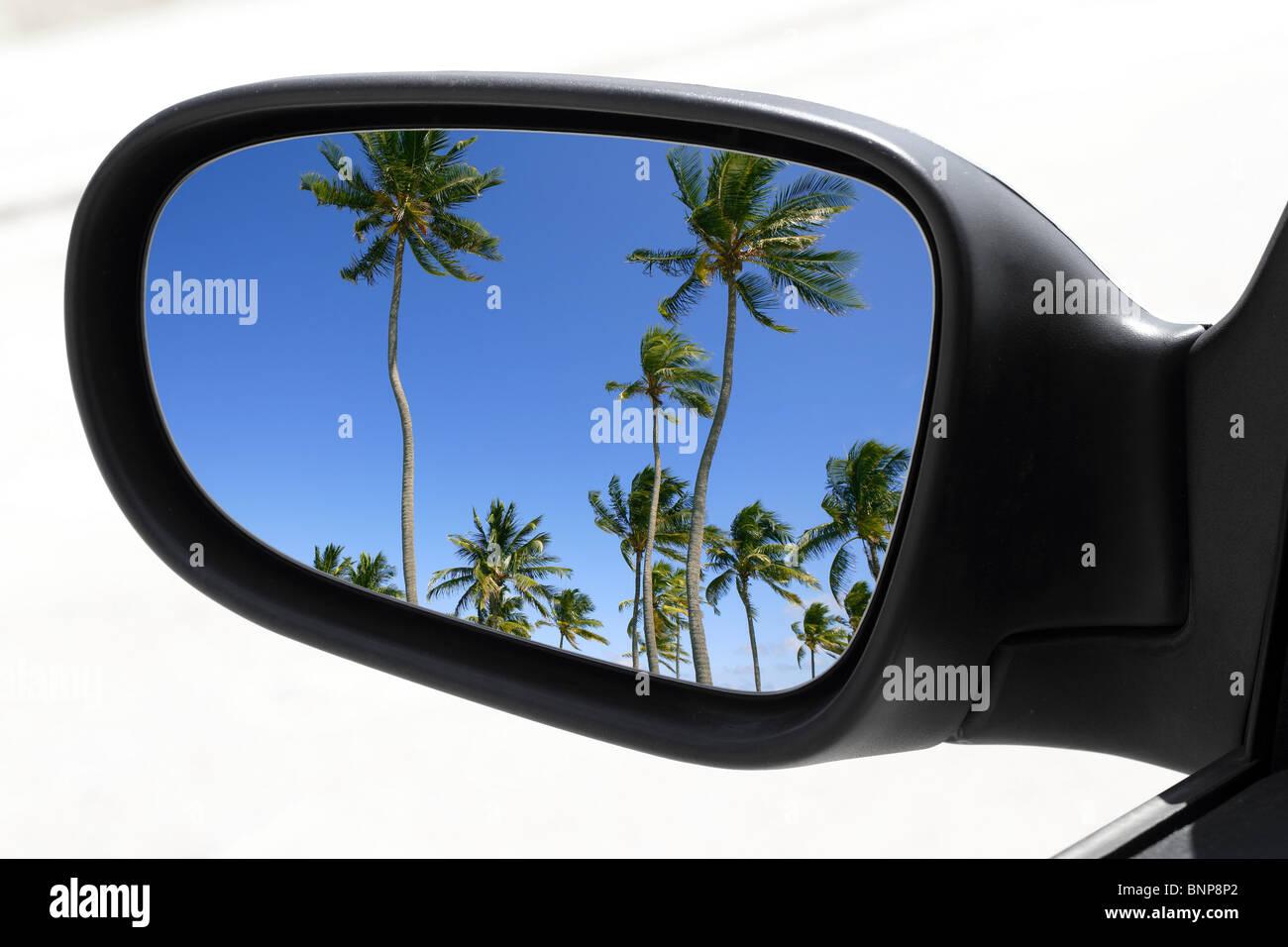 Specchietto di guida auto mirror view palme tropicali cielo blu Immagini Stock