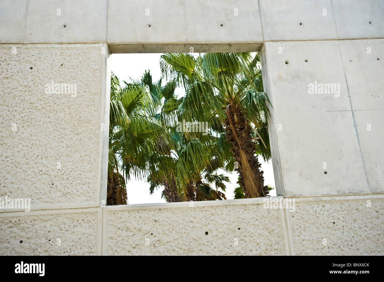 Palm tree visto attraverso il taglio-fuori della parete Immagini Stock