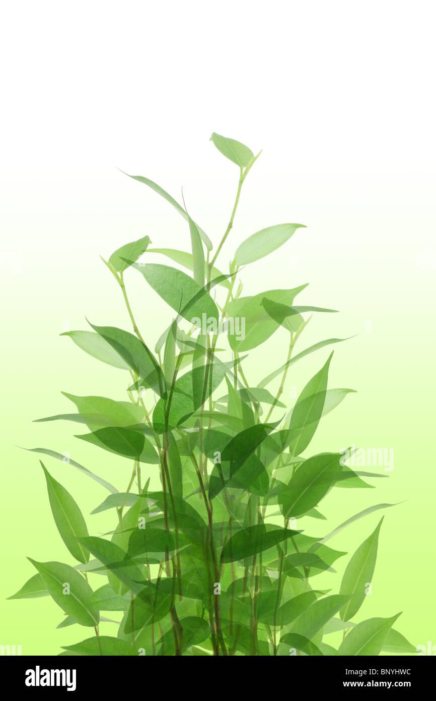 Giovani piante verdi su off lo sfondo bianco Immagini Stock