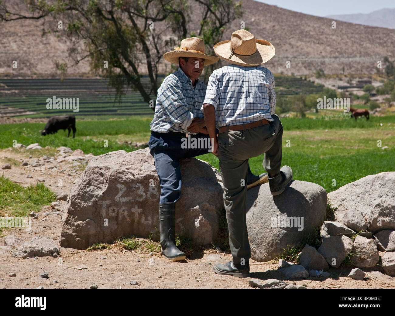 Inca Farmer Immagini   Inca Farmer Fotos Stock - Alamy 53eb61087824
