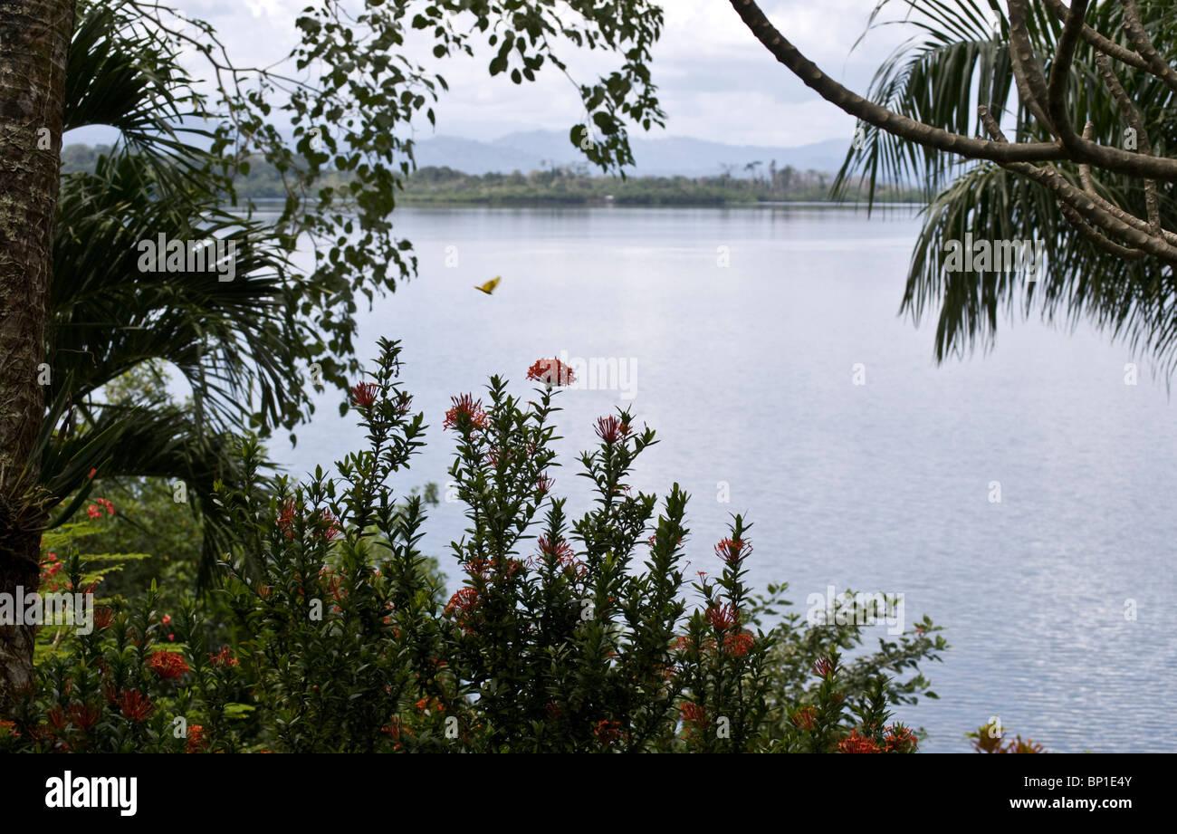 Colpo tranquilla affacciato sulla Baia dei Delfini in Bocas del Toro, Panama. Immagini Stock