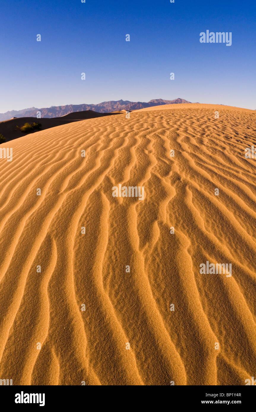 Luce della Sera su modelli di dune, Mesquite Flat dune di sabbia, il Parco Nazionale della Valle della Morte. California Immagini Stock