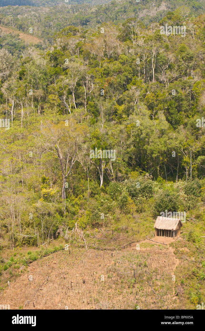 Un invasione di foresta, Madagascar. Immagini Stock