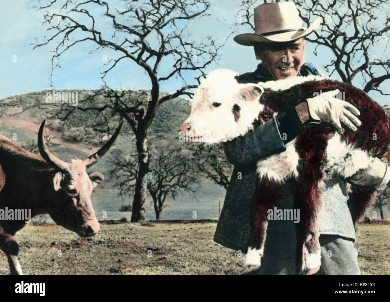 JAMES STEWART la razza rara (1966) Immagini Stock