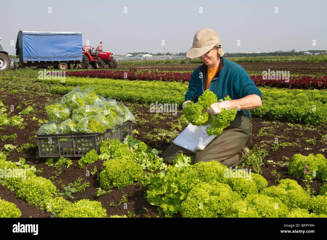 Giardini di mercato a Tarleton, West Lancs, Lancashire, Preston, Regno Unito Immagini Stock