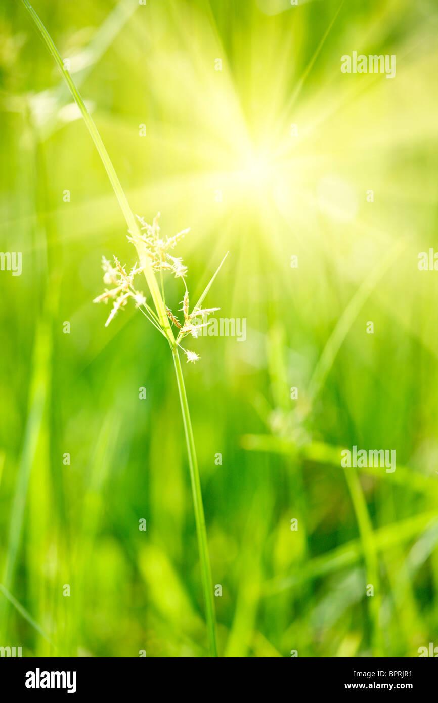 Erba verde - profondità di campo Foto Stock