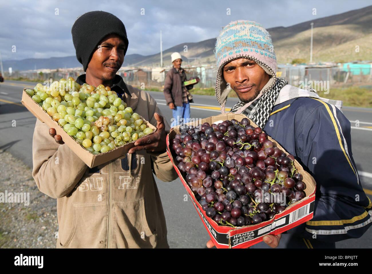 Sud Africa: gli uomini la vendita di uve sul ciglio della strada, Hexvalley regione vinicola della Provincia del Immagini Stock