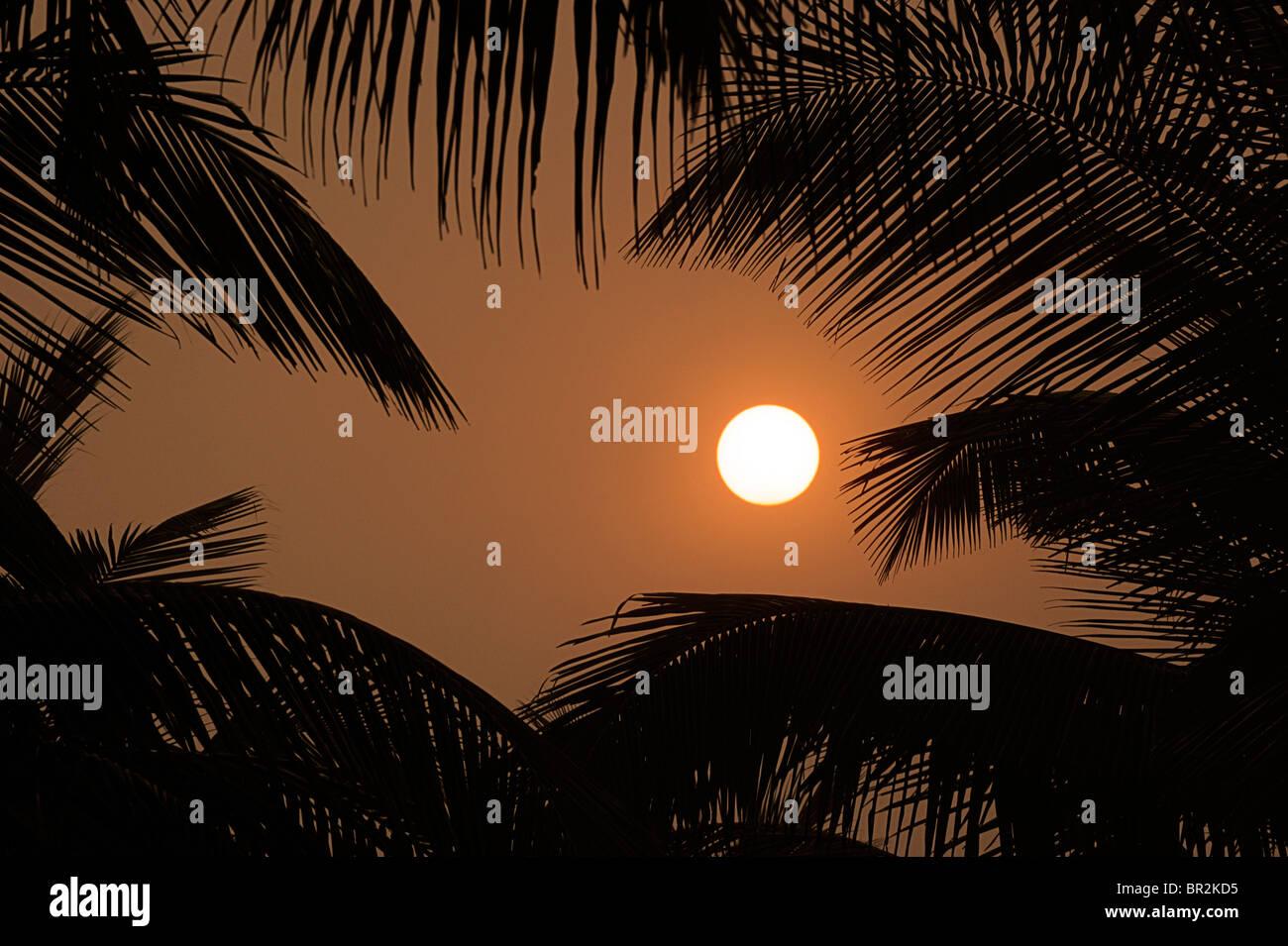 Sun, golden sky e stagliano palme. Tramonto indiano Immagini Stock