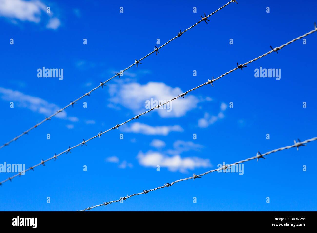 Filo spinato contro un cielo blu Immagini Stock