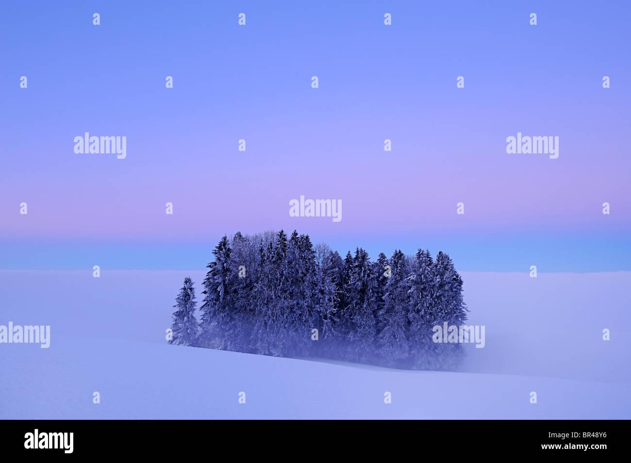 Foresta avvolta nella nebbia, Lindenberg, Argovia, Svizzera, Europa Foto Stock