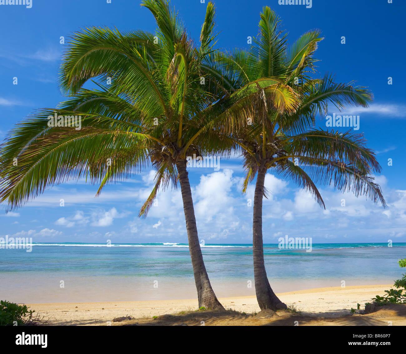 Kauai, Hawaii due palme telaio un tratto di Anini Beach sulla costa Nord di Kauai Immagini Stock