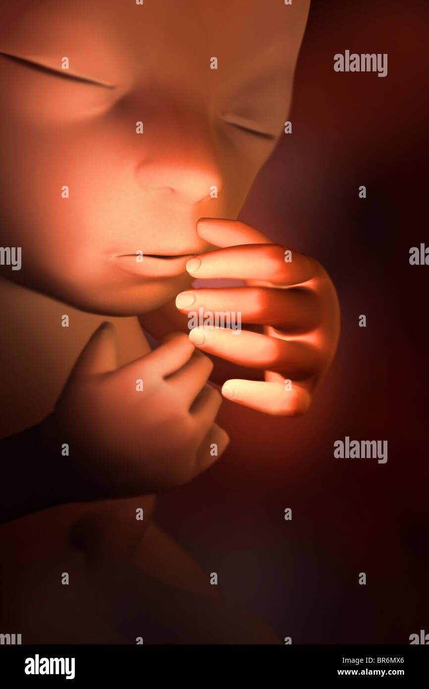 Questo 3D'immagine medica mostra un feto in (25) settimane. Immagini Stock