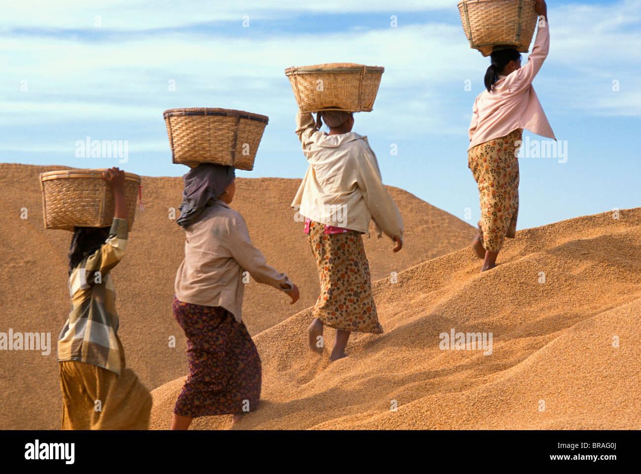 Gli agricoltori con il riso in Myanmar (Birmania), Asia Foto Stock