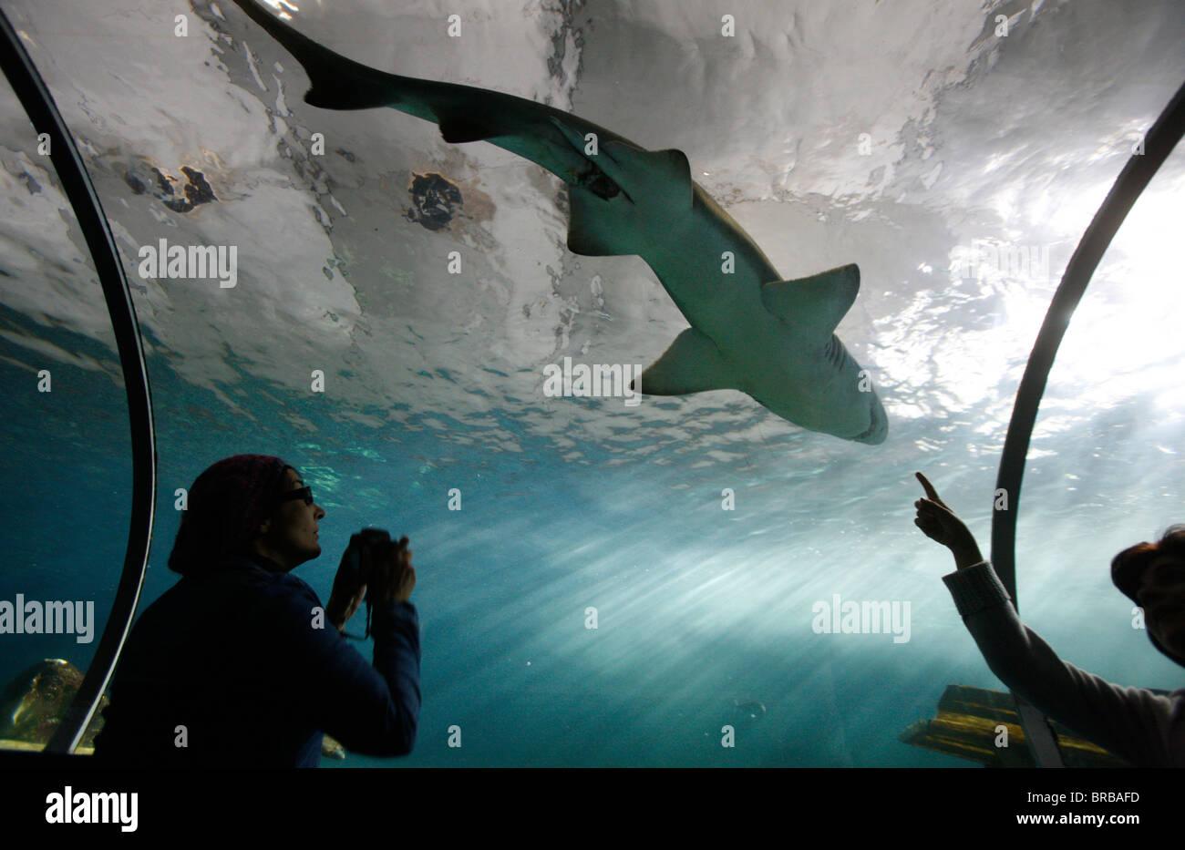 Vetro acrilico tunnel dove nuotano squali al di sopra dei visitatori, l'Acquario di Sydney e il Sydney, Nuovo Immagini Stock