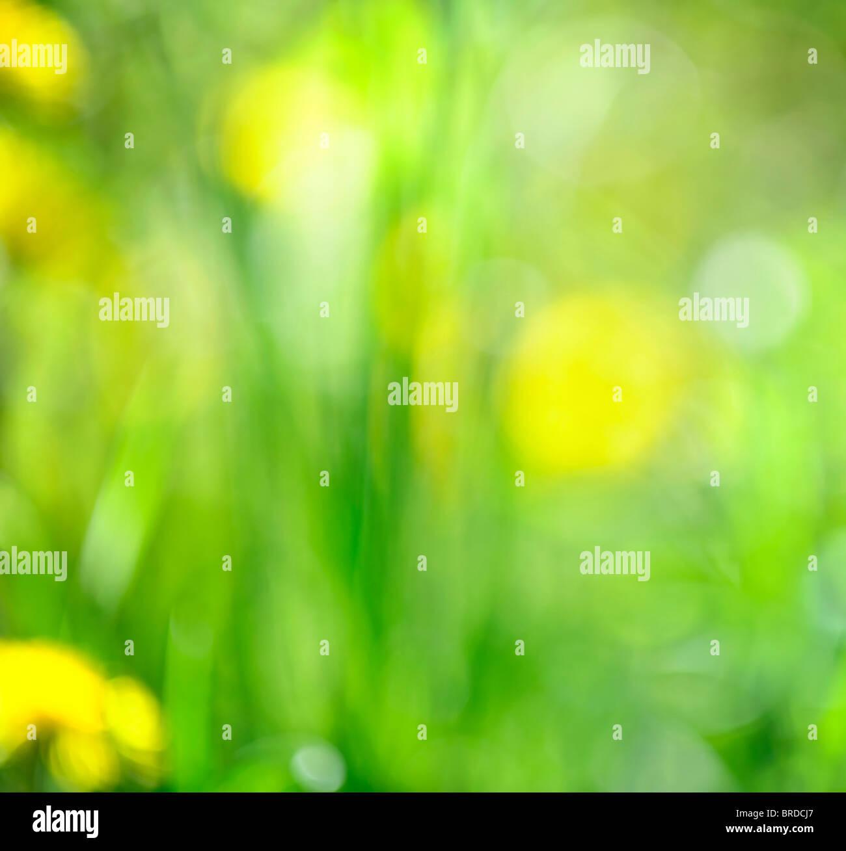 Erba Verde Sfumato In Fotocamera Per Sfondo Naturale O O Bokeh Di