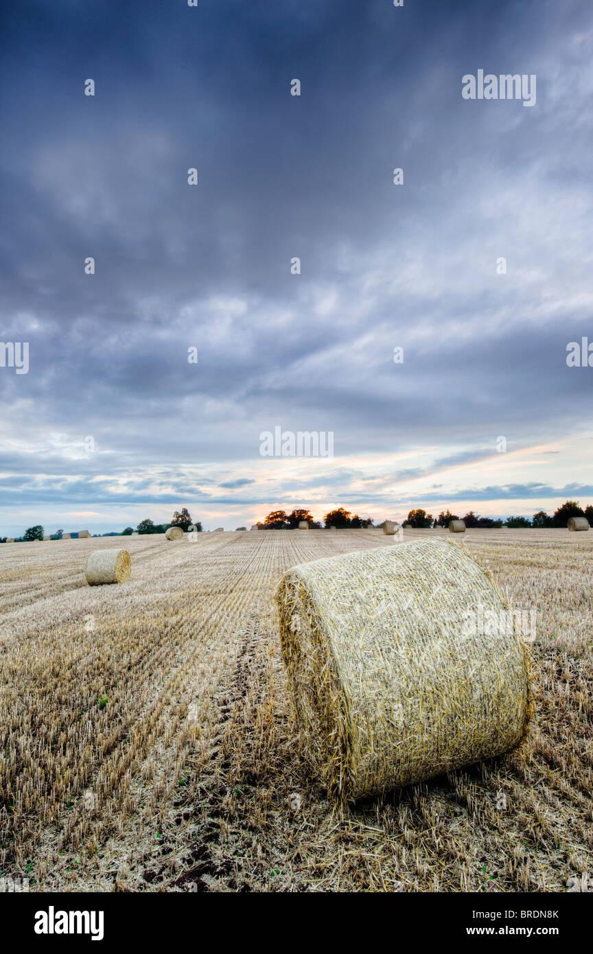Bails fieno e stoppia in un campo al tramonto, Warwickshire, Inghilterra, Regno Unito Immagini Stock