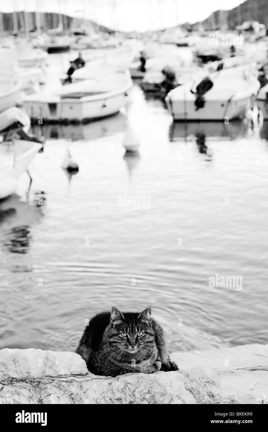 Cat in prossimità di acqua di mare Immagini Stock