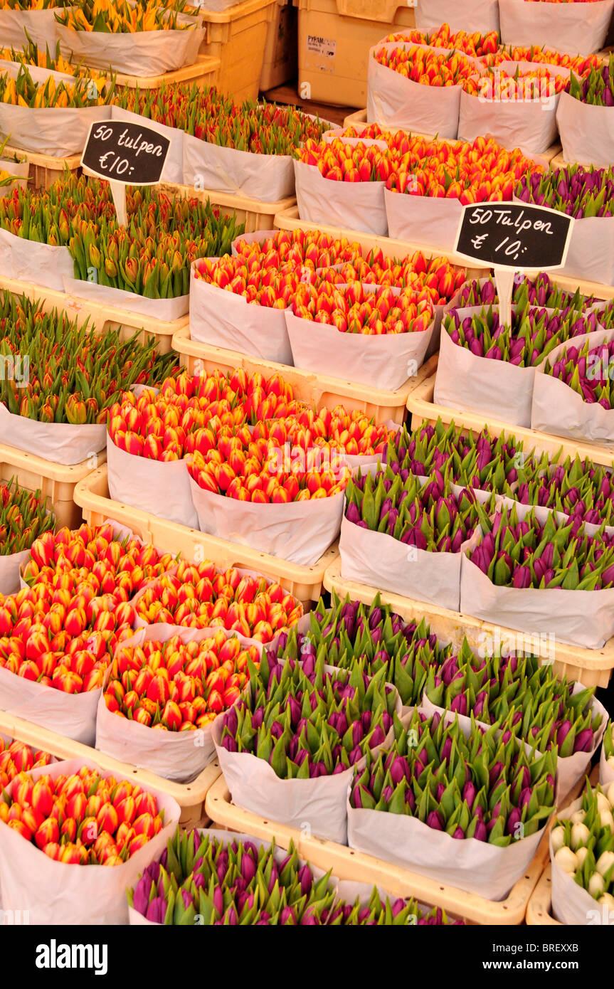 Tulipani presso il tradizionale mercato dei fiori nel centro della città di Amsterdam, Olanda, Paesi Bassi, Europa Foto Stock