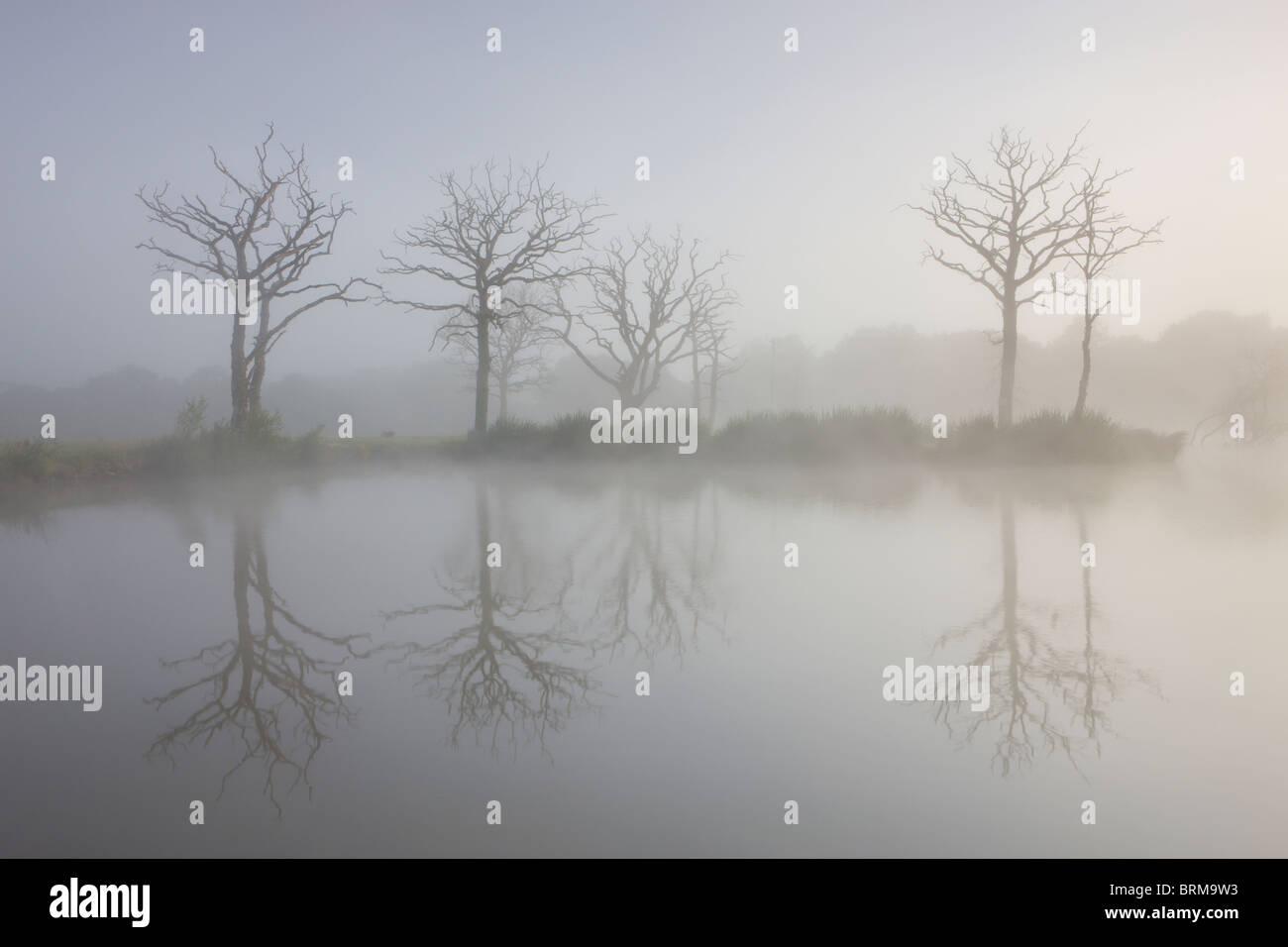 Foschia mattutina su un lago per la pesca sportiva con gli alberi morti, Morchard Road, Devon, Inghilterra. Immagini Stock