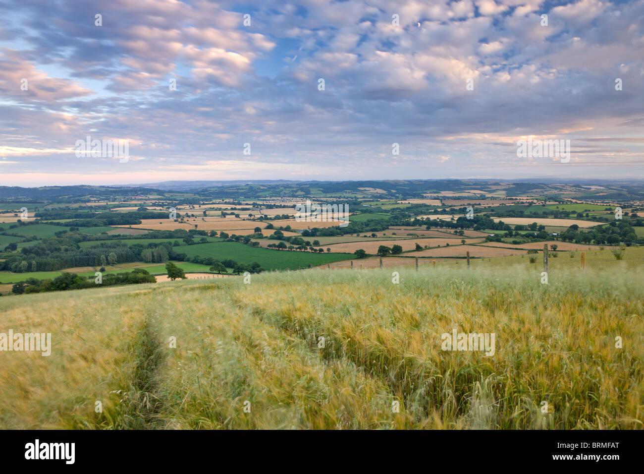 Campo di raccolto che si affaccia la laminazione continua la campagna della metà nel Devon, in Inghilterra. Immagini Stock