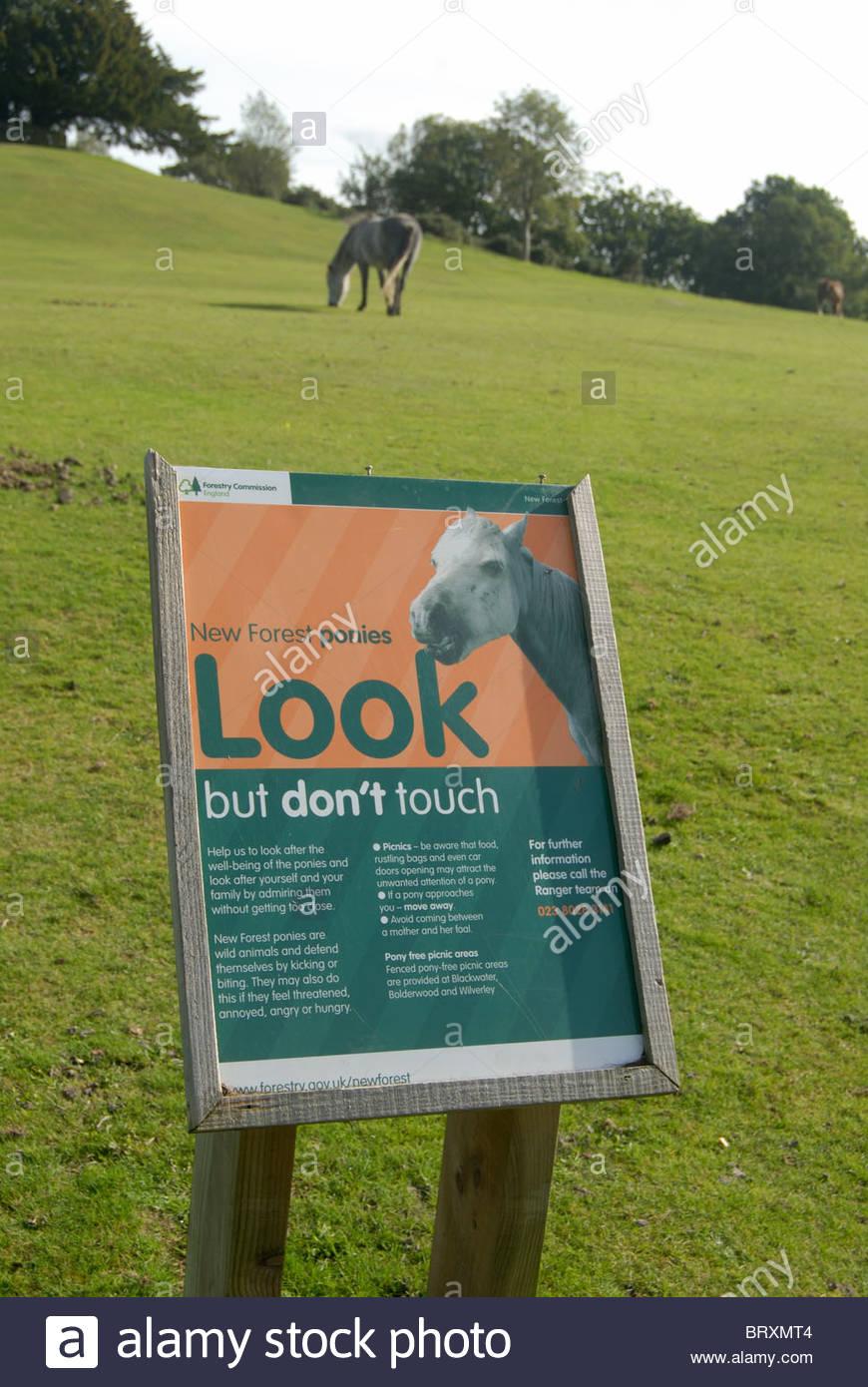Lyndhurst Regno Unito - Istruzioni per i turisti come dovrebbero trattare New Forest pony. Immagini Stock