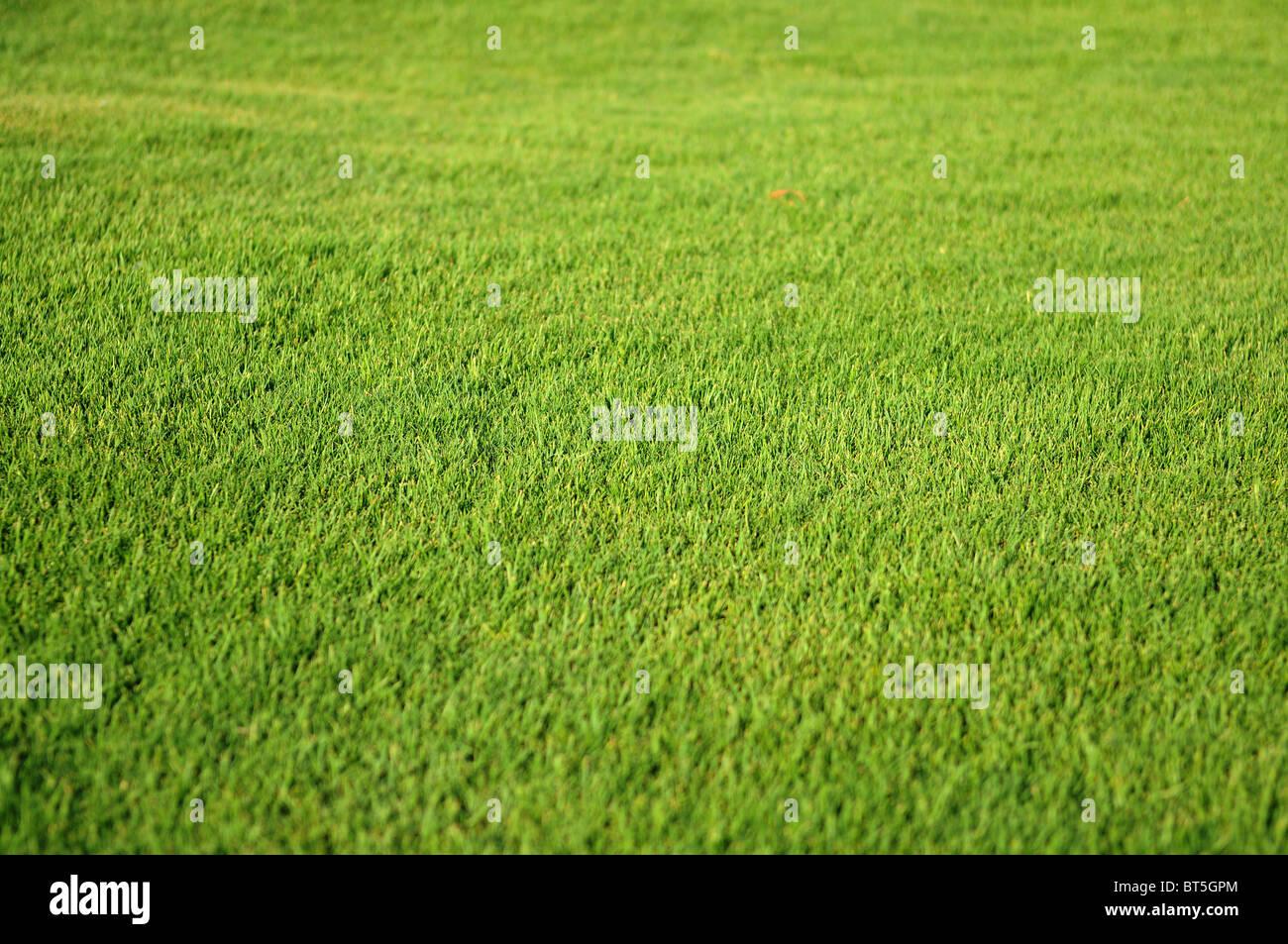 Erba verde sullo sfondo, fondale profondo della messa a fuoco Immagini Stock