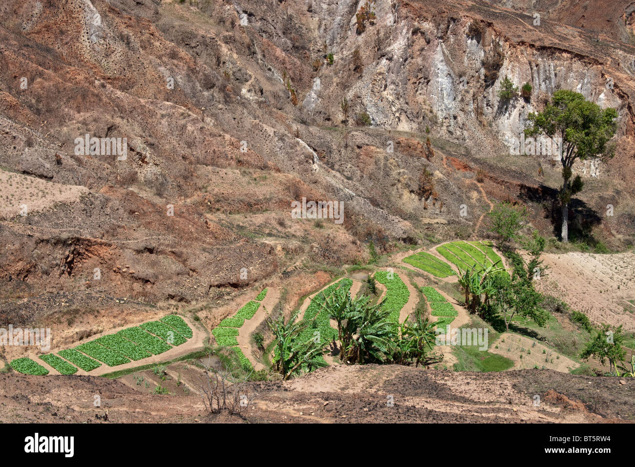 Agricoltura in valle, Analamanga, Madagascar. Immagini Stock